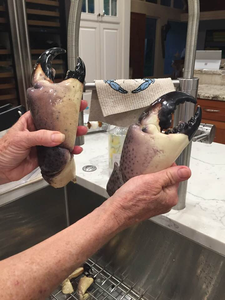 Some very large  stone crab claws to crack